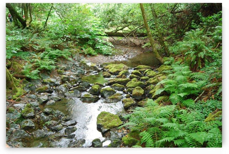 Creek Ferns by Matthew Ulisse