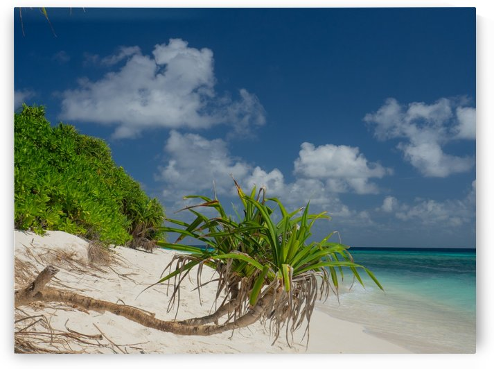 Maldivian Shoreline by Asia Visions Photography