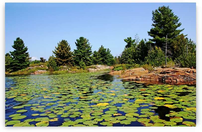 Lily Pads In The Shallows French River Delta by Deb Oppermann