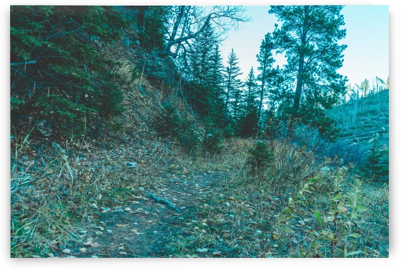 Hillside Path by Bret Leininger