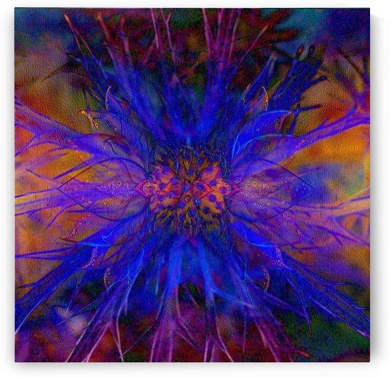 Erynigum blossom by Violet
