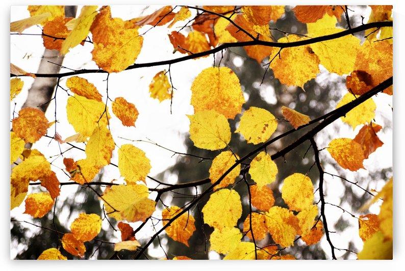 fall .. by Anu Hamburg