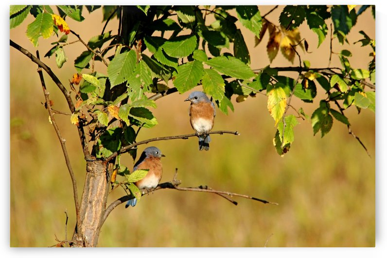 Two Little Bluebirds Sitting In A Tree by Deb Oppermann