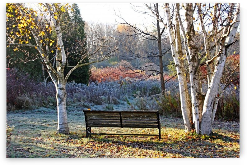 Frosty Autumn Morning Light by Deb Oppermann