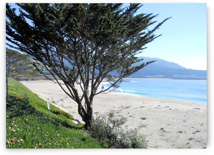 Beach1 by Jodi Webber