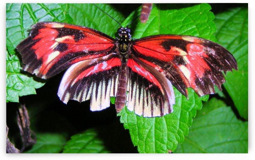 Butterfly14 by Jodi Webber