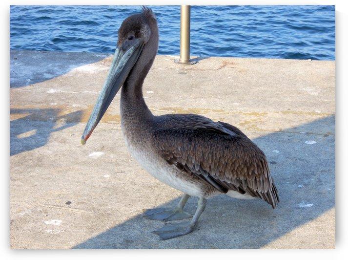 Bird6 by Jodi Webber