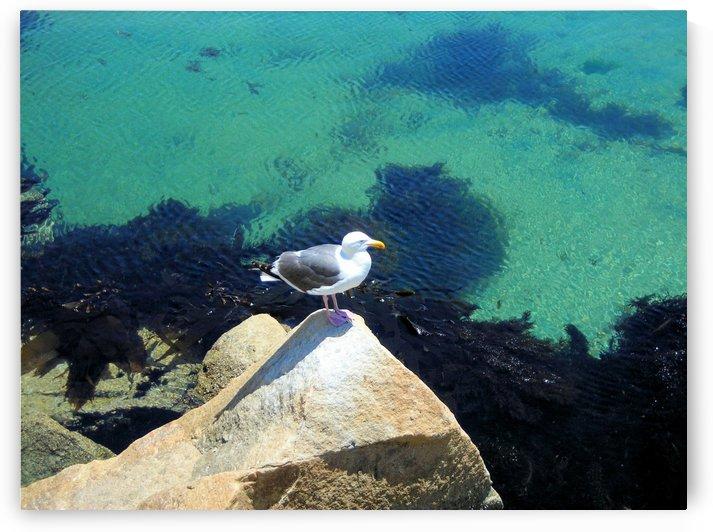 Bird20 by Jodi Webber
