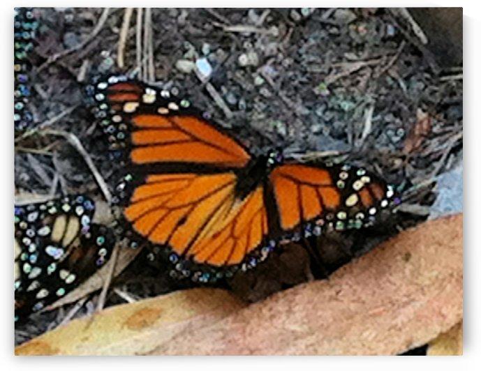 Butterfly4 by Jodi Webber