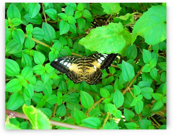 Butterfly8 by Jodi Webber