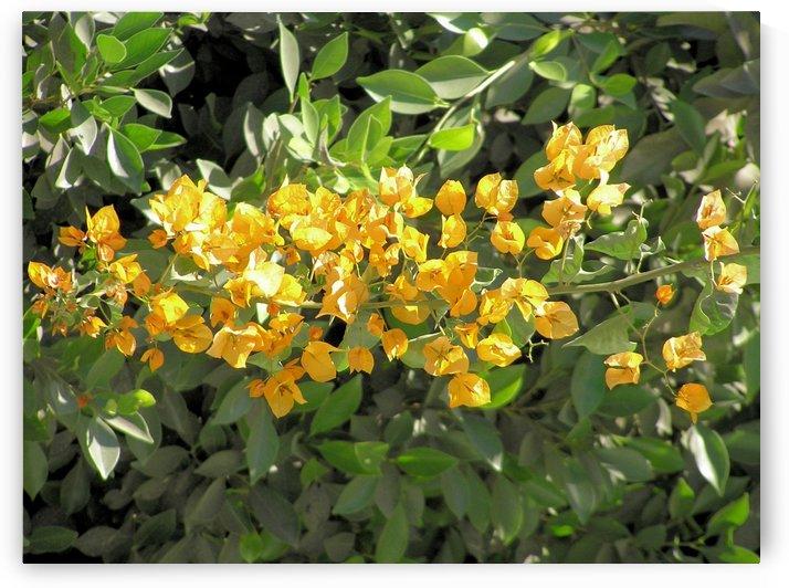 Flower35 by Jodi Webber