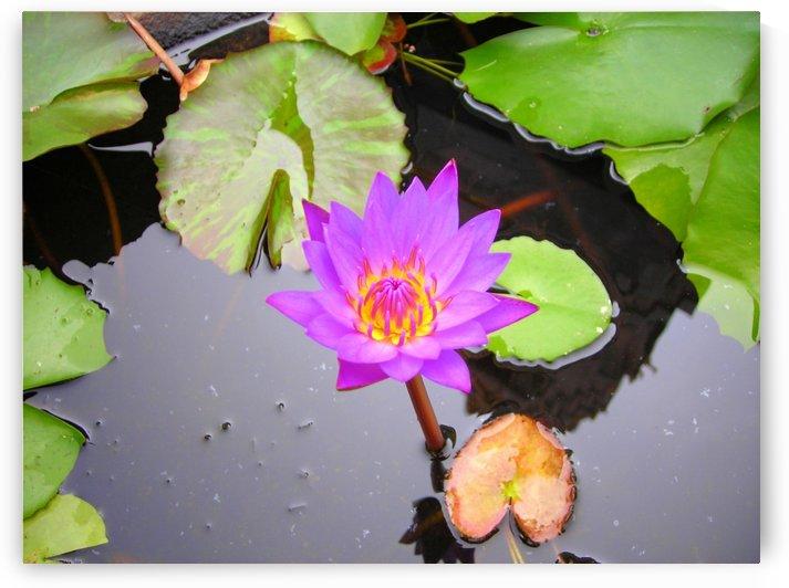 Flower10 by Jodi Webber