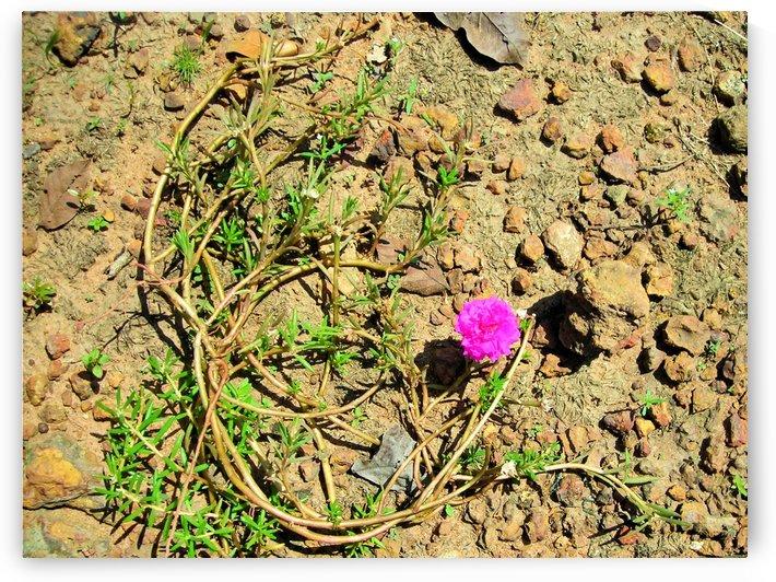 Flower16 by Jodi Webber