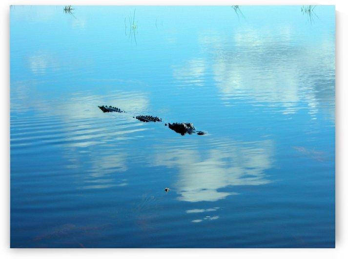 Everglades1 by Jodi Webber