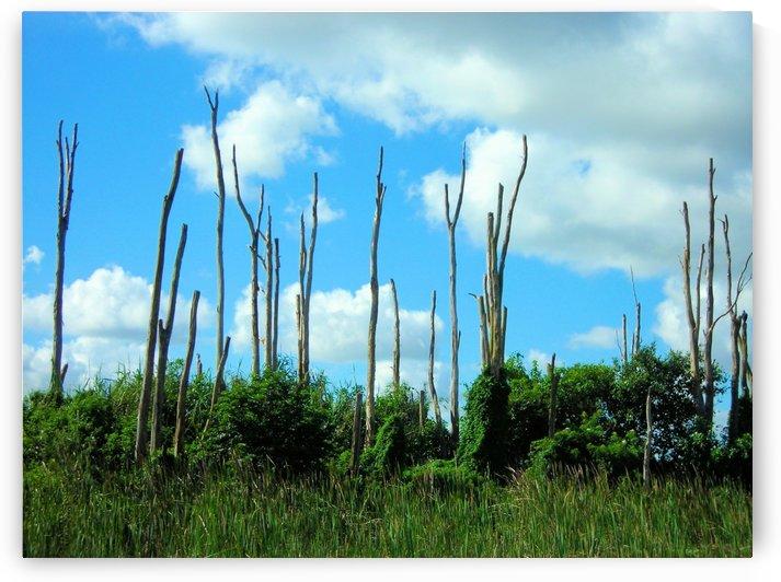 Everglades2 by Jodi Webber