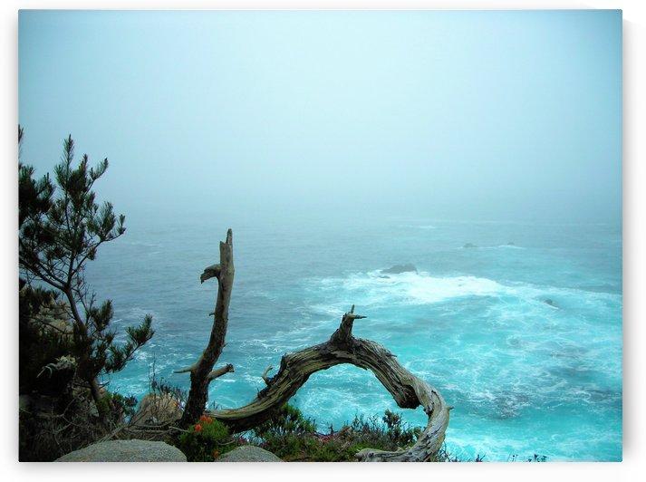 Ocean1 by Jodi Webber