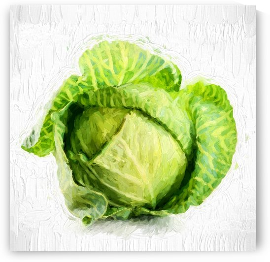 Cabbage by A WYN CHANCE