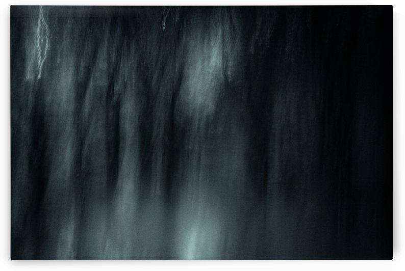 Dark forest 1 by Vishal Tomar