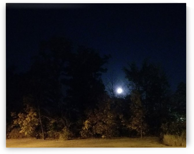 Moon in trees by Wendy A Rohn