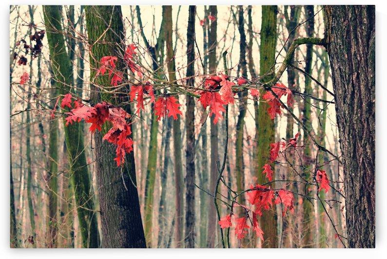 Red Leaves by Kikkia Jackson