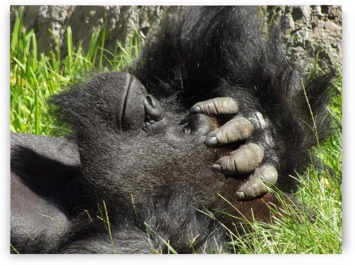 Gorilla Headache by Linda Peglau