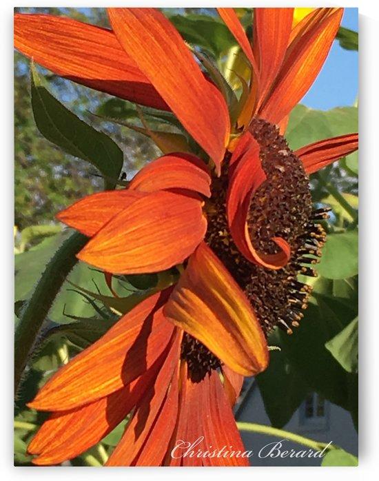 Sunflower seeds  by VortexStyle
