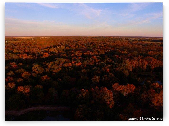 Fall forest in Furlow Arkansas by Lanehart Drone Service
