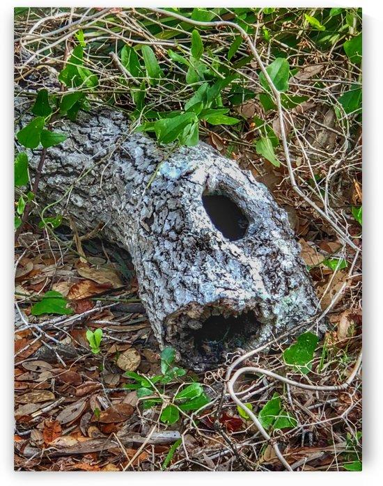 Hollow log by Pamela Winter