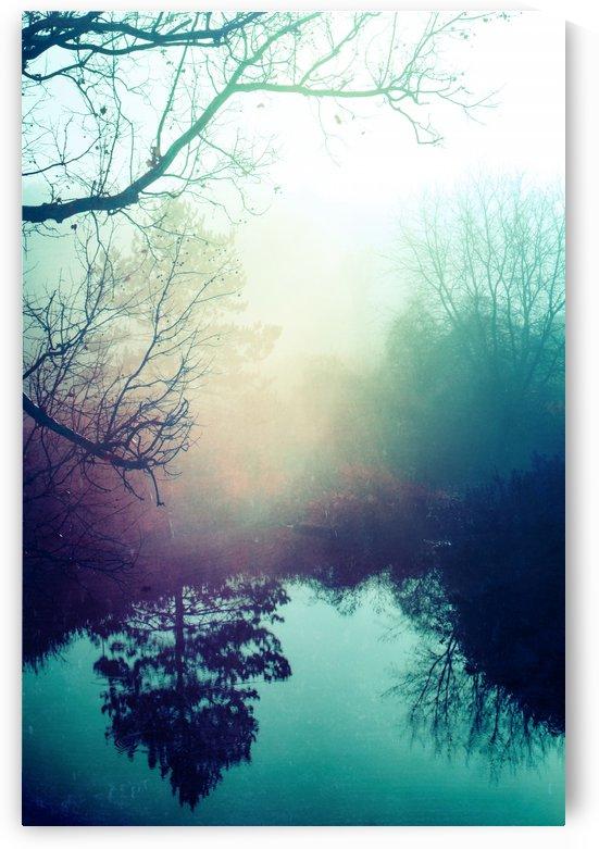 Autumn Fog by Faded Photos