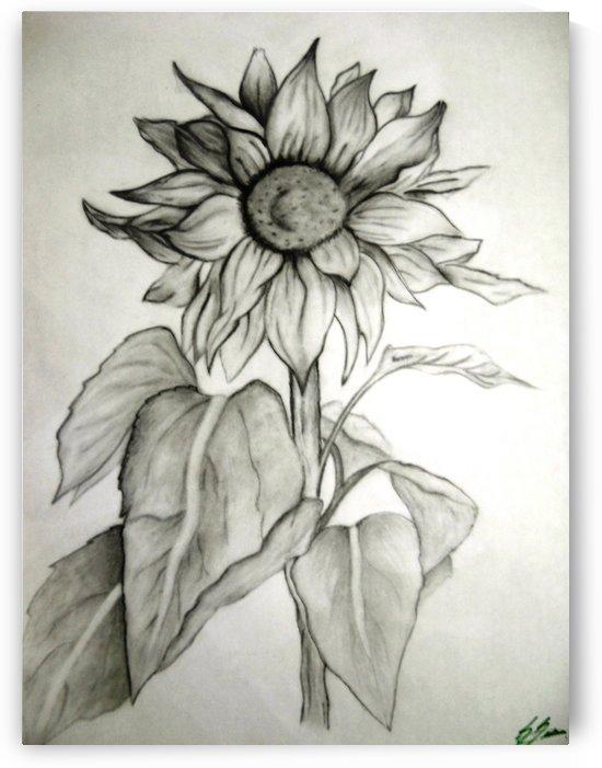 sunflower by sheilabi