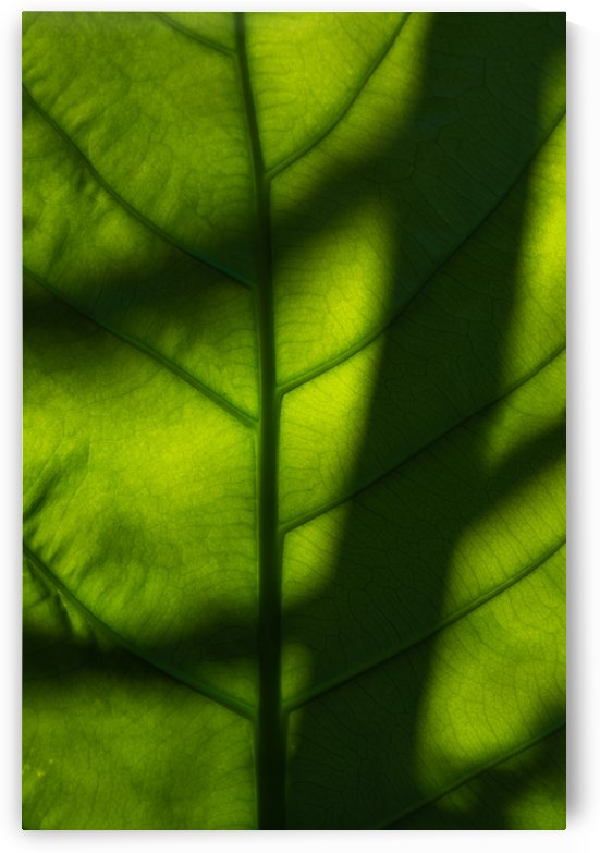 Light and shadow on leaf by Krit of Studio OMG