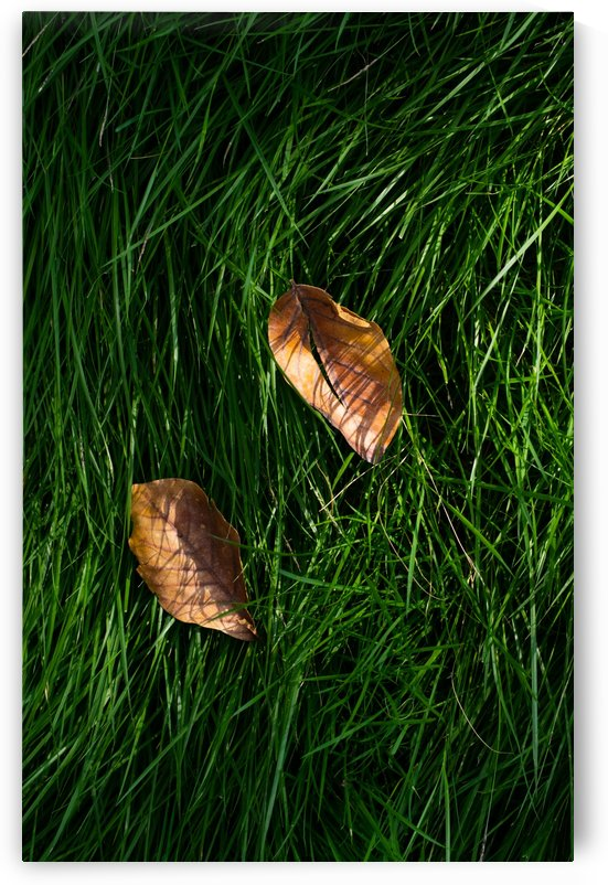 Fallen leaves on green grass by Krit of Studio OMG