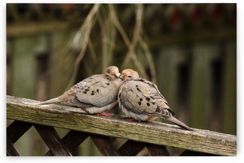 Put Your Head On  My Shoulder by Deb Oppermann