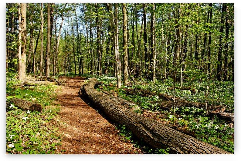 Trillium Trail by Deb Oppermann