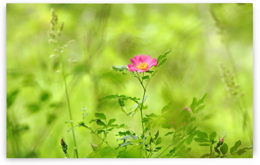 Splashes Of Pink In Field Of Green by Deb Oppermann