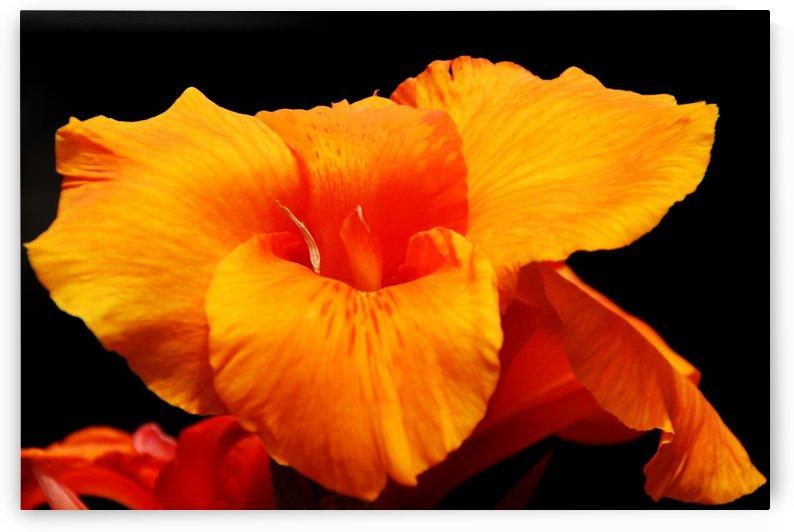 Orange Canna Lily by Deb Oppermann