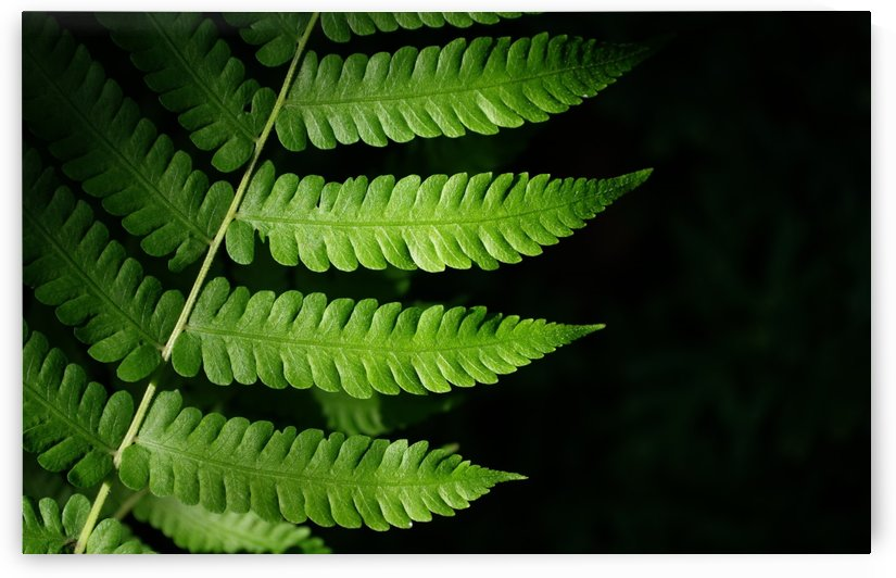 Green leaves with light and shadow by Krit of Studio OMG