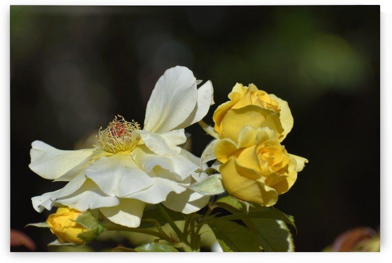 Flower V by Angelo A Keene