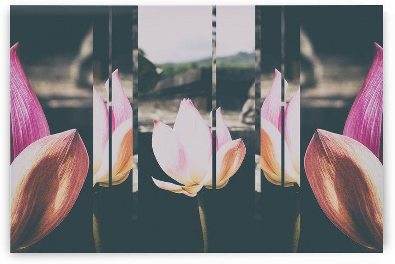 Pink Lotus Collage by Ira Silence