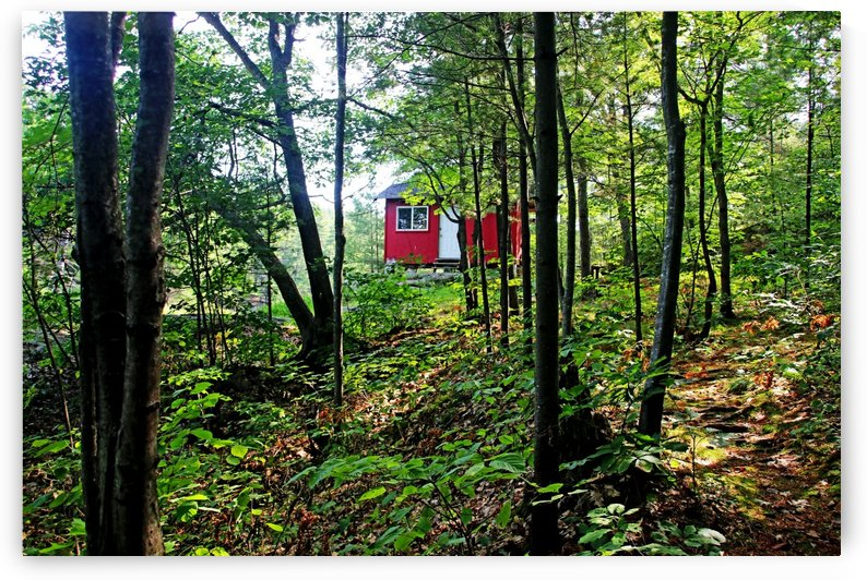 Little Red Cabin In The Woods by Deb Oppermann