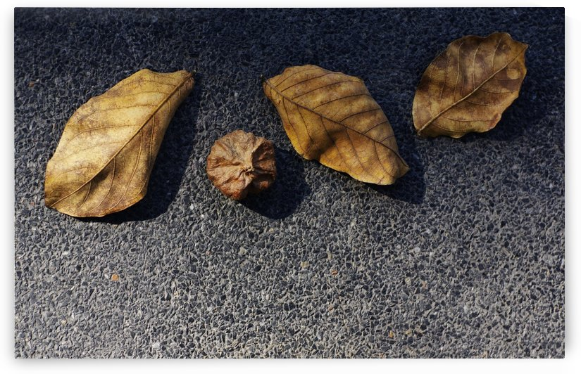Fallen leaves on floor by Krit of Studio OMG
