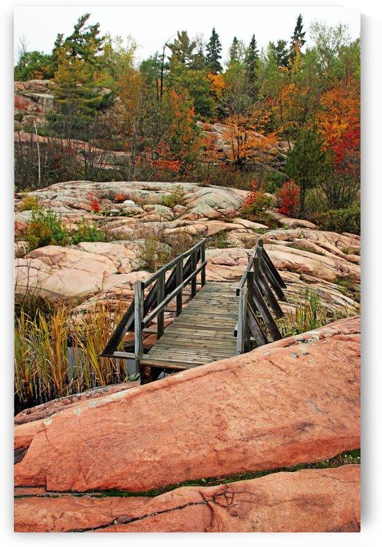 Chikanishing Trail Boardwalk II by Deb Oppermann