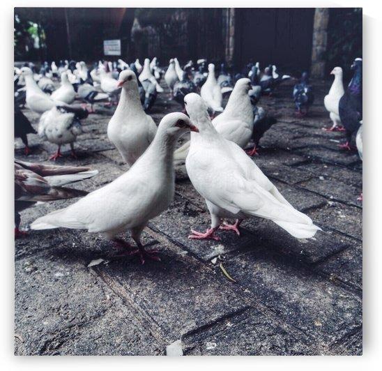 The doves by Karen