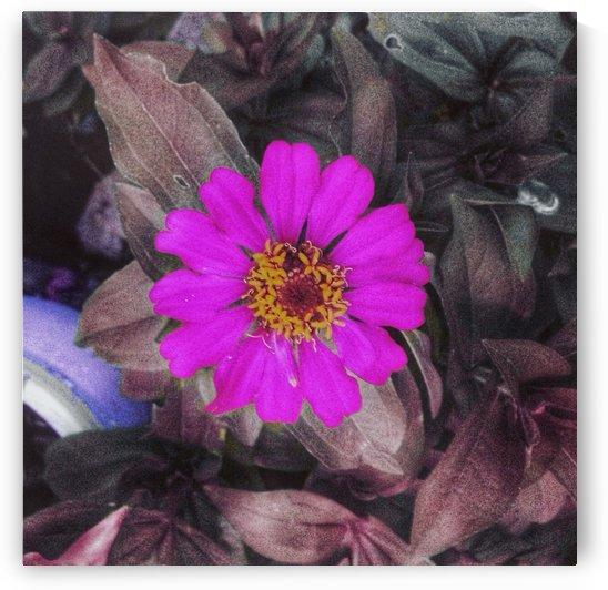 Flower by Karen