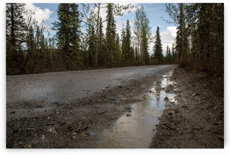 Dirt Road Therapy by Stan Reese