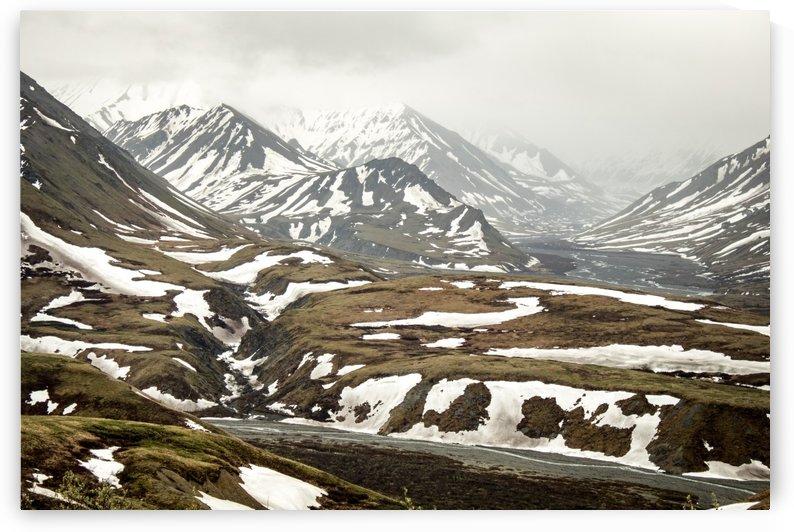 Wild Alaska by Stan Reese