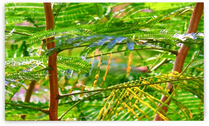 Greenery by Nilu Mishra
