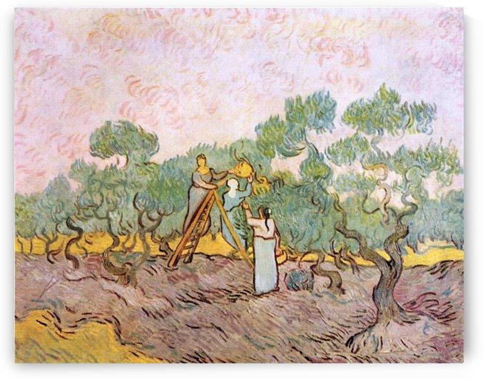 Olive Pickers by Van Gogh by Van Gogh