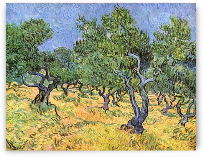 Olive Trees by Van Gogh by Van Gogh