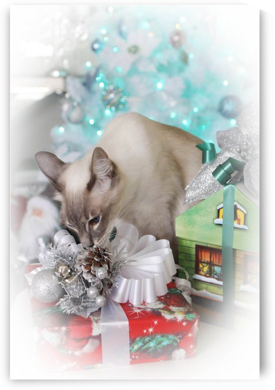 Presents by Yuliya Marusina